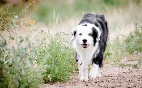 Wallpaper grass, nature, dog