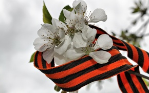 Picture flowers, George ribbon, Victory day