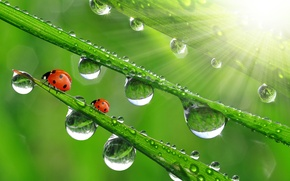 Picture drops, macro, ladybugs, the sun's rays, grass