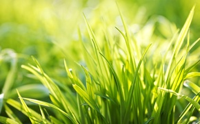 Picture greens, summer, grass, light, joy, freshness, mood, silence, plant, plants, spring, morning, weed, widescreen Wallpaper, …