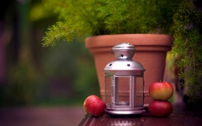 Picture apples, plant, candle, flashlight, lantern, fruit, pot, Ikea
