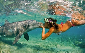 Picture Nature, The ocean, Sea, Girl, Kiss, Summer, Dolphin, Pair, Friendship