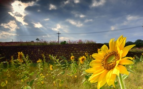 Picture greens, summer, clouds, the fence, sunflower, focus, masonry, the sun's rays