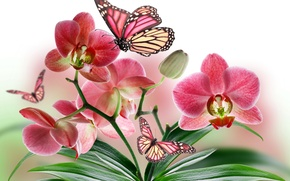 Picture flowers, nature, collage, butterfly, plant, wings, petals, Orchid