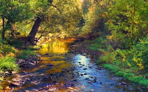 Picture autumn, forest, leaves, trees, landscape, stream, stones, river