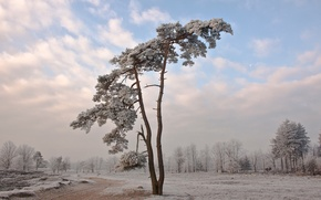 Picture cold, winter, snow, landscape, nature, tree, Wallpaper, wallpapers