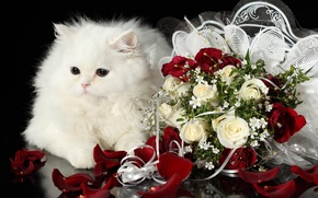 Picture white, cat, roses, bouquet, fluffy