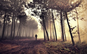 Picture road, alone, man, morning fog in the forest