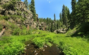 Picture forest, summer, grass, the sun, trees, stream, stones, rocks, USA, New Mexico