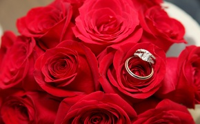 Picture red, holiday, roses, ring, wedding