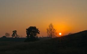 Wallpaper the sun, trees, sunset