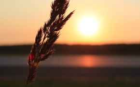 Picture road, sunset, ear, Grass, spike