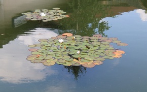Picture water, Lily, zoo, 2016