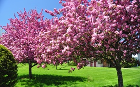 Picture flowers, beauty, blooming, nature, garden, trees, bloom, in bloom, flowering, the sky, spring