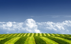 Picture field, summer, the sky, grass, clouds