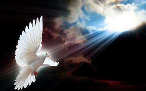 Picture the sky, the sun, rays, bird, dove, flight