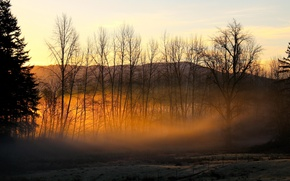 Picture the sun, light, trees, fog, golden haze