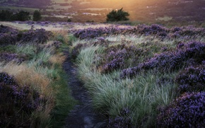 Picture grass, the sun, flowers, nature, trail, the evening