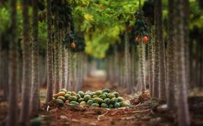 Picture nature, garden, fruit
