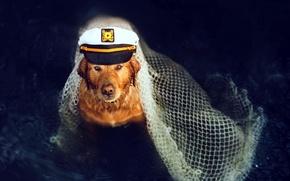 Picture each, network, dog, captain, cap