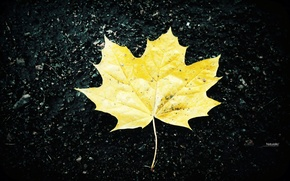 Picture autumn, yellow, sheet