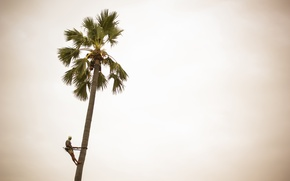 Picture man, sunny, coconut palm