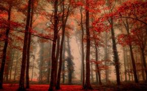 Wallpaper autumn, forest, nature
