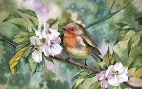 Picture bird, branch, Robin