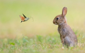 Picture animals, nature, butterfly, rabbit
