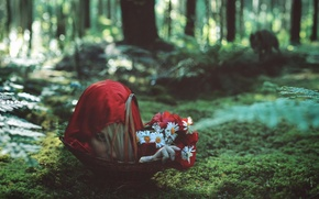 Picture forest, wolf, the situation, little red riding hood, head