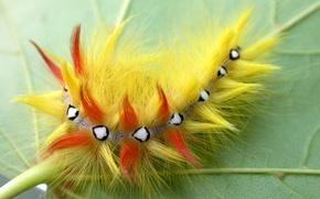 Picture caterpillar, sheet, wool