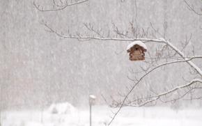 Picture winter, house, Blizzard