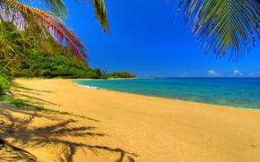 Wallpaper palm trees, stay, nature, sand, clouds, the sky, river, landscape