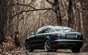 Picture machine, auto, trees, Audi, photographer, auto, photography, photographer, feed, Thirteen