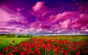 Picture field, the sky, grass, clouds, trees, landscape, Maki, red