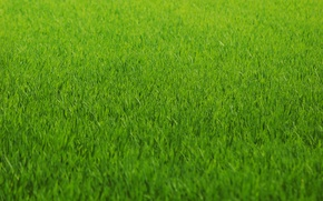 Picture greens, grass, lawn, green, color, Texture