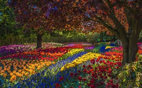 Picture trees, flowers, Park, tulips