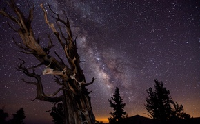 Picture the sky, trees, night, excerpt, The milky way, the winner of astronomical photographs :-)