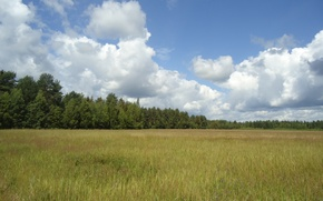 Picture forest, summer, the sky, clouds