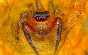 Wallpaper jumper, sheet, autumn, yellow, jumper, spider