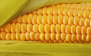 Wallpaper macro, corn, cereal, useful, color, corn, delicious, food, food, yellow