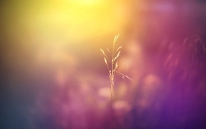Picture field, macro, flowers, nature, background, Wallpaper, plant, color, blur, meadow, wallpaper, widescreen, background, full screen, …