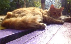 Picture cat, Cat, shop, yard, the sun's rays, sunlight