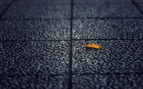 Wallpaper asphalt, macro, yellow, background, earth, widescreen, Wallpaper, leaf, wallpaper, leaf, widescreen, background, full screen, HD ...