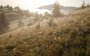 Picture landscape, fog, morning