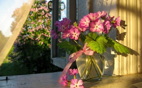 Picture flowers, Summer, window, vase, curtain