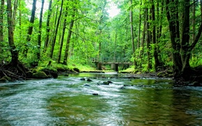 Picture greens, forest, trees, bridge, nature, river