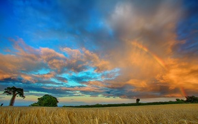 Picture field, clouds, trees, rainbow