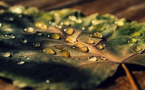 Picture leaves, water, macro, Rosa, background, widescreen, Wallpaper, drop, leaf, wallpaper, leaf, widescreen, background, full screen, …
