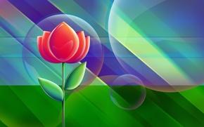 Picture flower, line, circles, bubbles, background